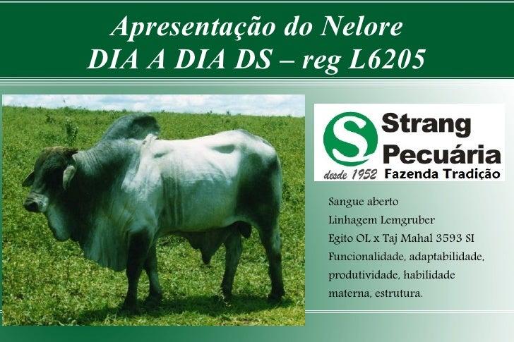 Apresentação do Nelore DIA A DIA DS – reg L6205                     Sangue aberto                  Linhagem Lemgruber     ...