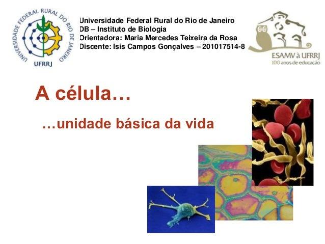 A célula… …unidade básica da vida Universidade Federal Rural do Rio de Janeiro DB – Instituto de Biologia Orientadora: Mar...
