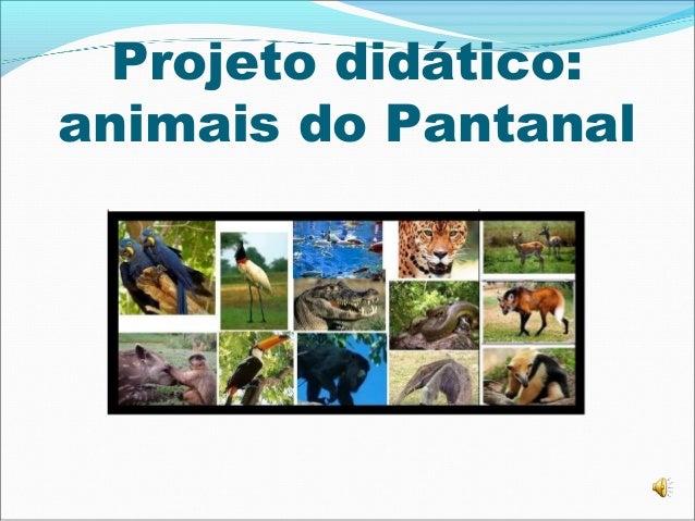 Projeto didático: animais do Pantanal