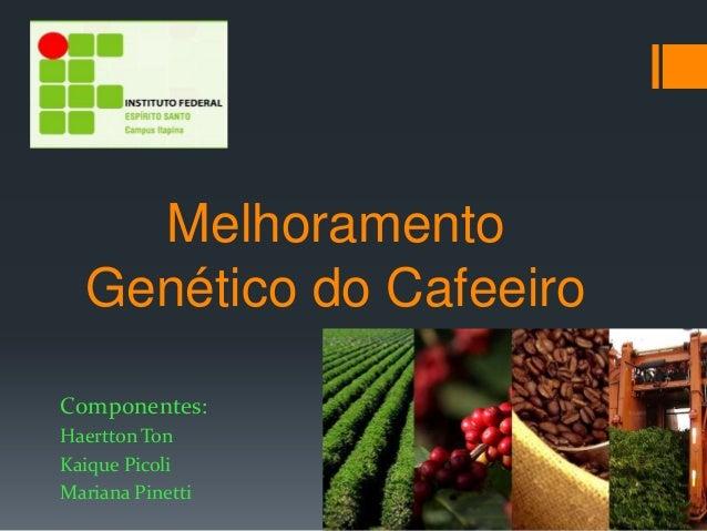 Melhoramento  Genético do CafeeiroComponentes:Haertton TonKaique PicoliMariana Pinetti