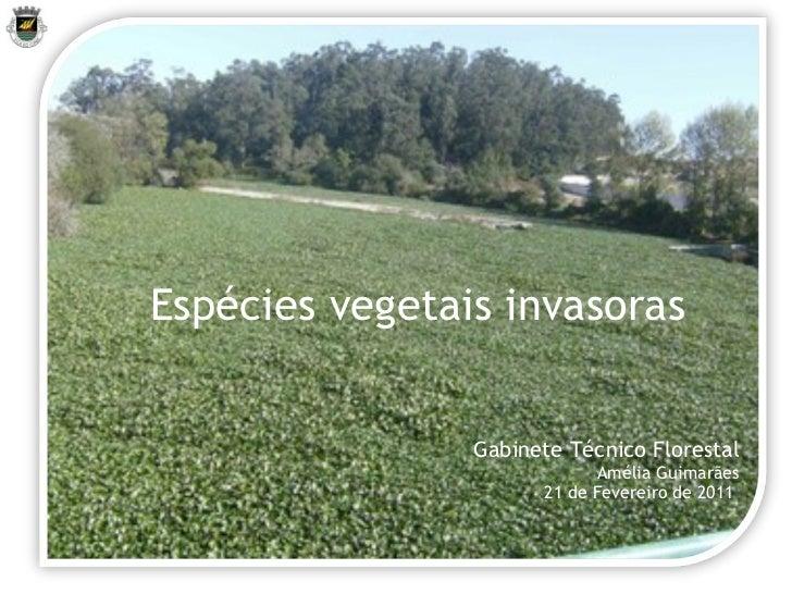 Gabinete Técnico Florestal Amélia Guimarães 21 de Fevereiro de 2011  Espécies vegetais invasoras