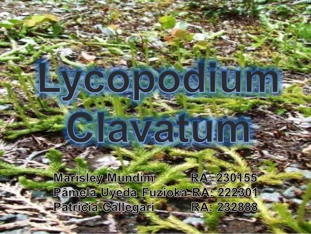 Lycopodium clavatum:   Licófito muito antigo   Pertence à família das Lycopodiaceas   Crescimento ralo e seco, preferem...