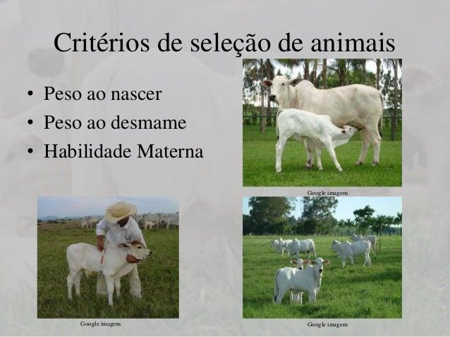 Melhoramento genetico animal em pdf