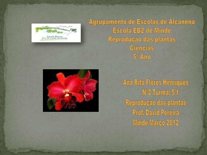 Os órgãos de reprodução deuma planta com flor
