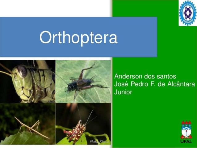 Anderson dos santos José Pedro F. de Alcântara Junior Orthoptera