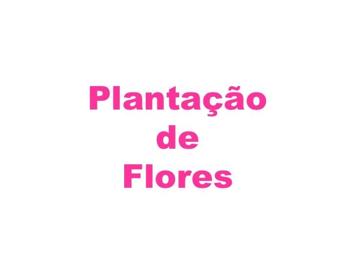 Plantação de Flores<br />