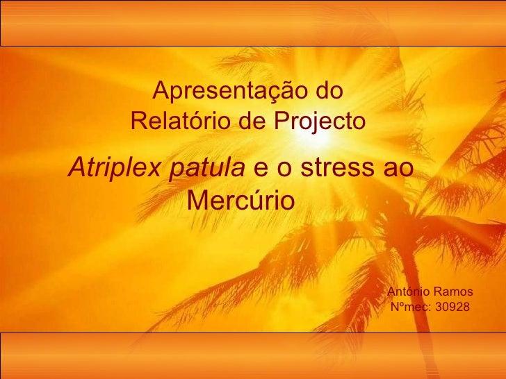 Apresentação do Relatório de Projecto António Ramos Nºmec: 30928 Atriplex patula  e o stress ao Mercúrio