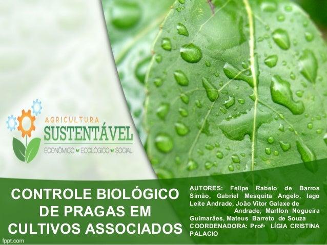 CONTROLE BIOLÓGICO  DE PRAGAS EM  CULTIVOS ASSOCIADOS  AUTORES: Felipe Rabelo de Barros  Simão, Gabriel Mesquita Angelo, I...