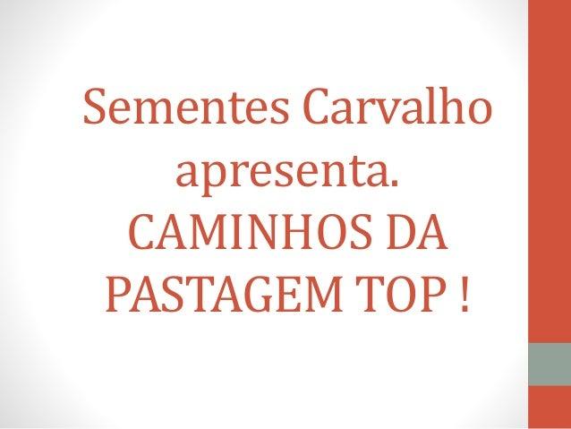 Sementes Carvalho apresenta. CAMINHOS DA PASTAGEM TOP !