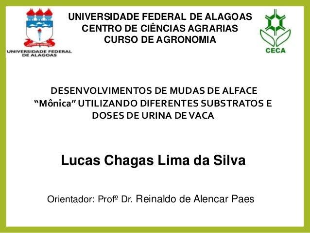 """DESENVOLVIMENTOS DE MUDAS DE ALFACE """"Mônica"""" UTILIZANDO DIFERENTES SUBSTRATOS E DOSES DE URINA DEVACA Orientador: Profº Dr..."""