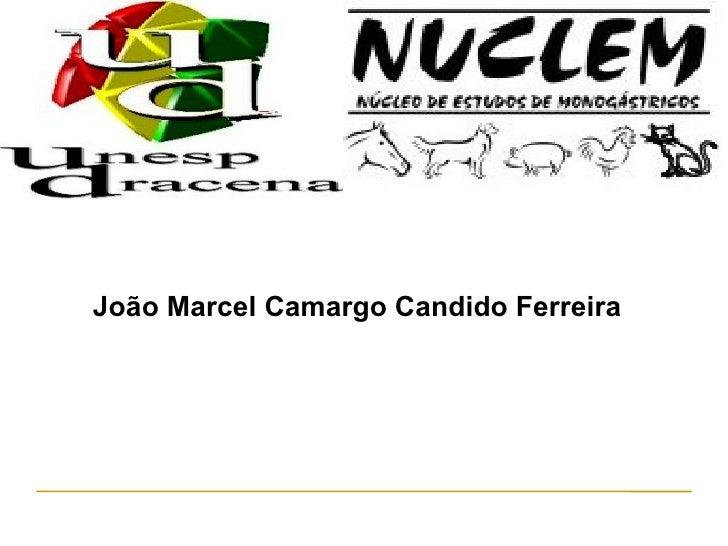 João Marcel Camargo Candido Ferreira