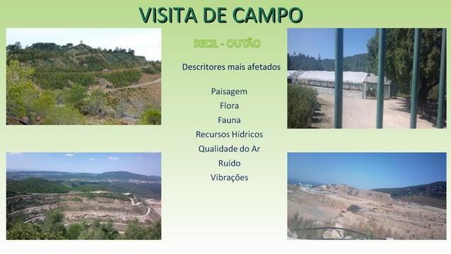 VISITA DE CAMPOVISITA DE CAMPO Descritores mais afetados