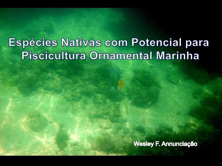 Introdução•No mercado de peixes ornamentais marinhos, cerca de 90% dasespécies são capturadas em ambiente•O Brasil tem uma...