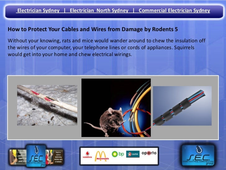 How To Protect Your Cables And Wires From Damage By Rodents