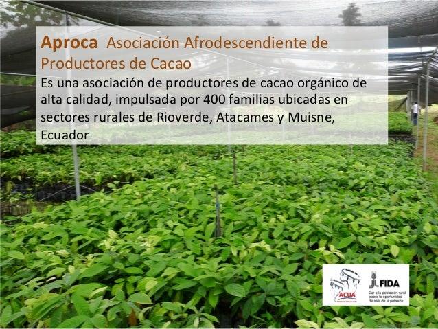 EL CULTIVO DE Aproca  Asociación Afrodescendiente de Productores de Cacao                           ...