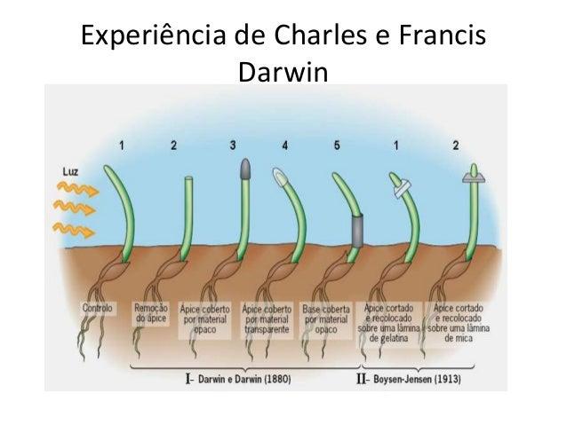 Experiência de Charles e Francis Darwin