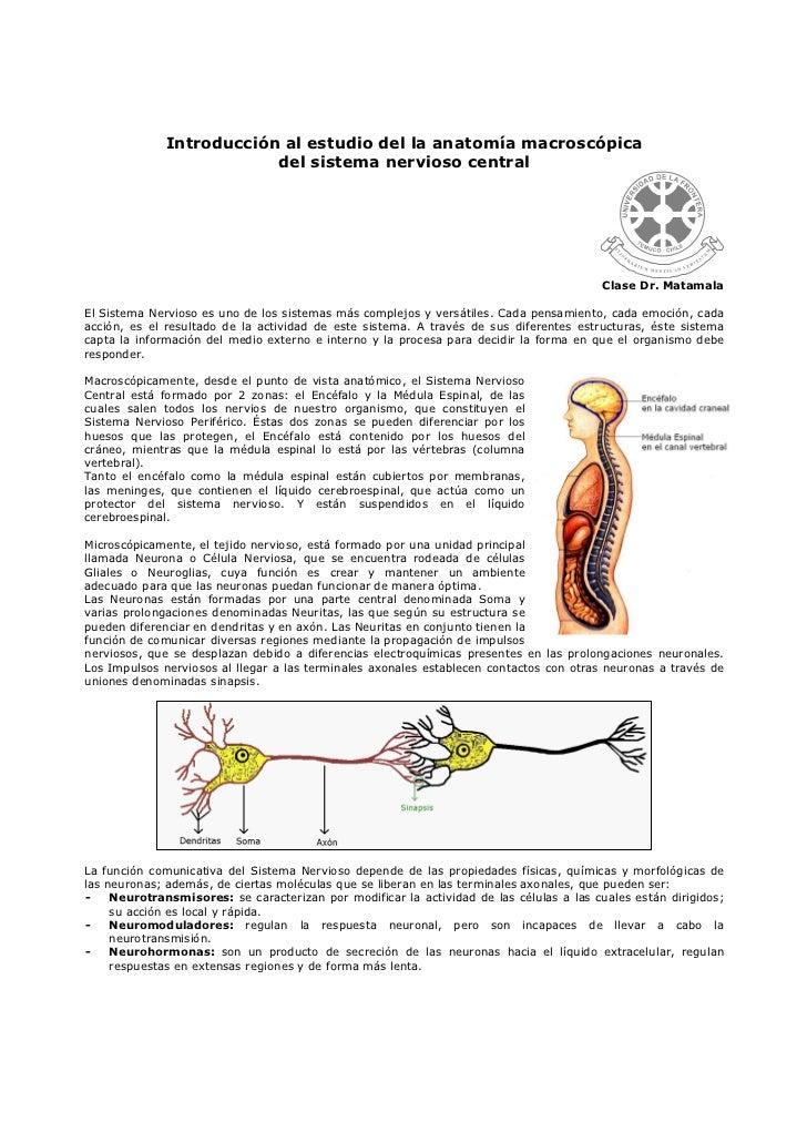 Introducción al estudio del la anatomía macroscópica del sistema nerv…