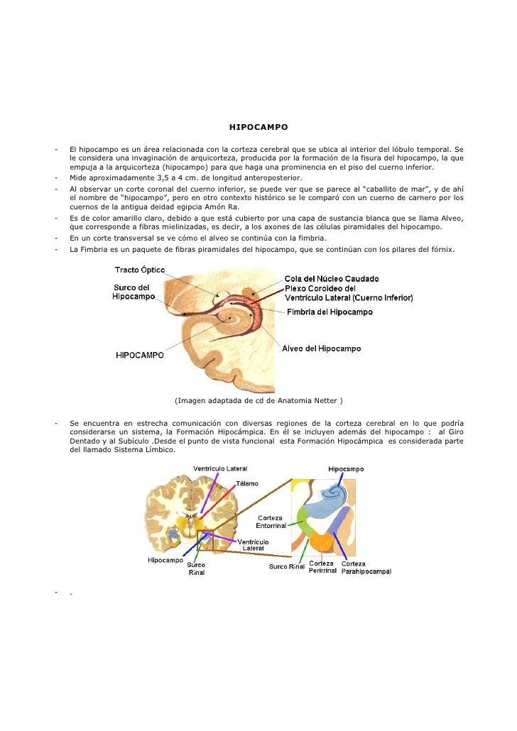 Apunte11