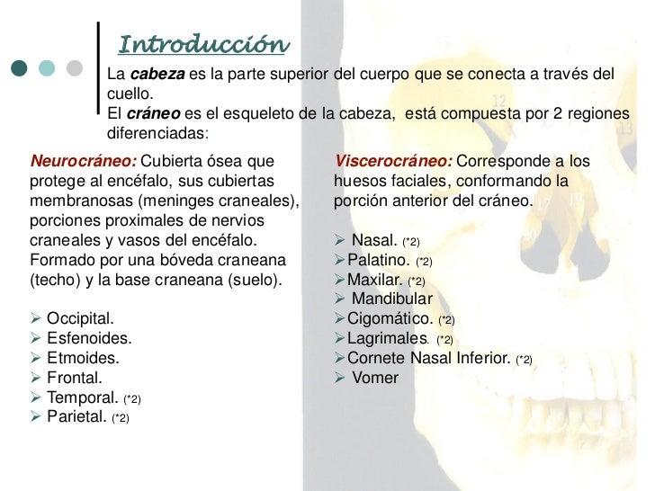 Apunte Cabeza Ósea Slide 2