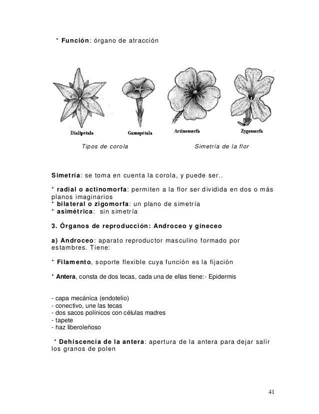 d4025b8a436b Apuntes.sobre.botanica