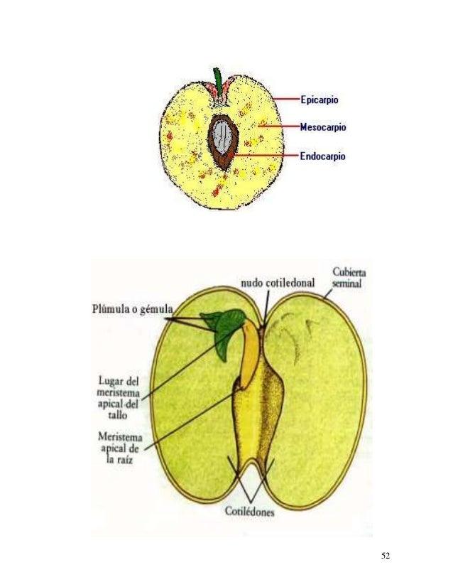 Apuntes.sobre.botanica