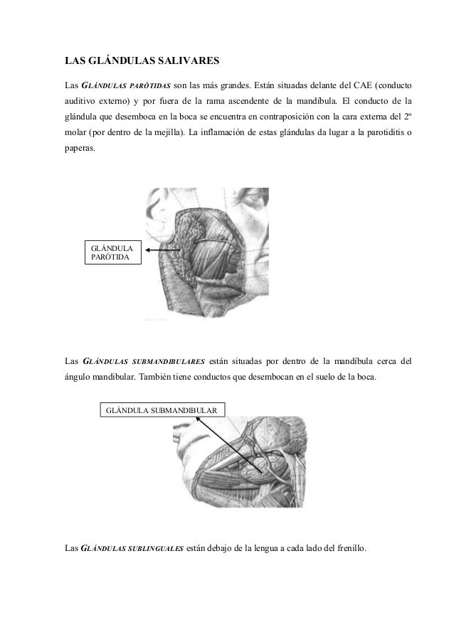 Apuntes anatomia 4_angeles