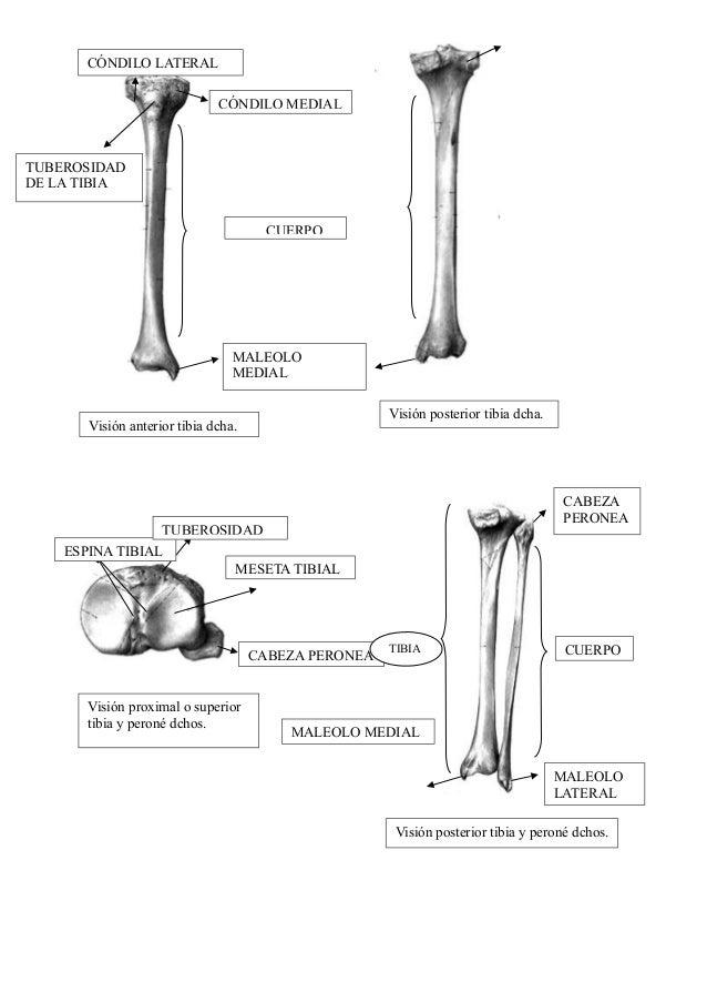 Apuntes de anatomia enfermeria