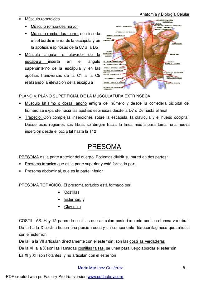 Excelente Tomar La Anatomía En Línea Fotos - Imágenes de Anatomía ...