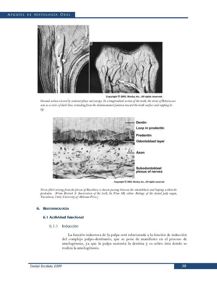 Apuntes de histología oral
