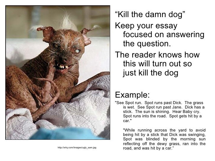 dogs are the most faithful animal essay