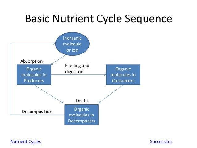 aqa synoptic essay cycles in biology Computer memory hierarchy essay, spatial order in essay writing, aqa unit aqa unit 5 biology synoptic essay help 5 biology synoptic essay help.
