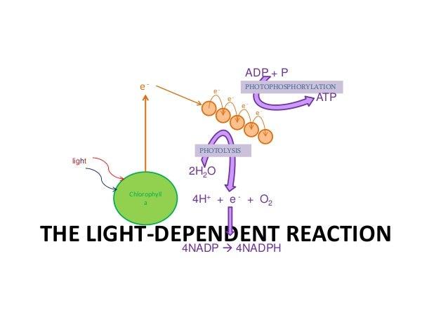 Light Independent Reaction Definition Aqa A2 Biology Unit