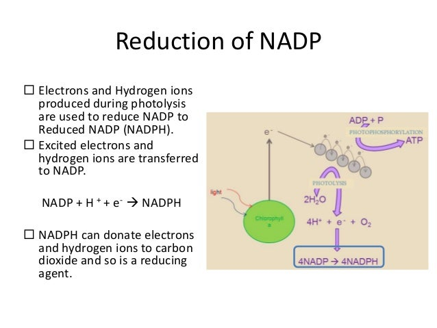 Reduction Biology