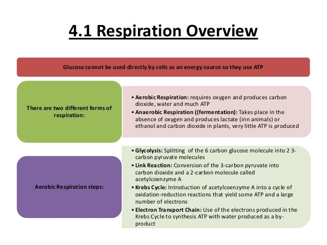 biology coursework yeast respiration View yeast experiment egroves from biol 1071 at university of arkansas,  monticello exploring cellular respiration overview cellular.
