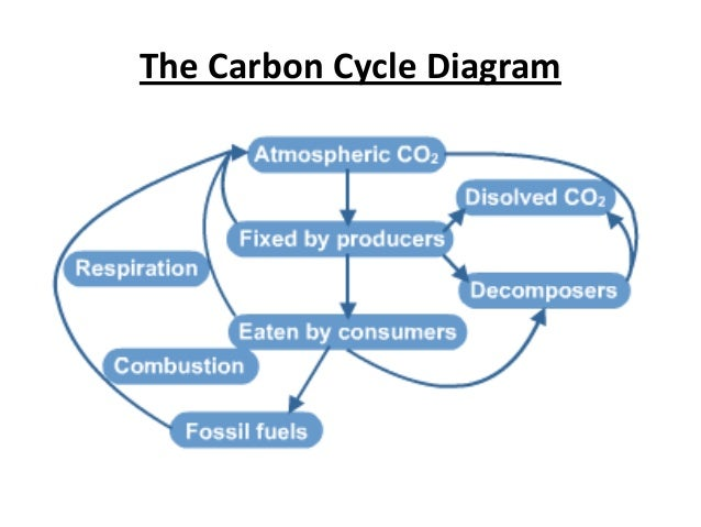 Aqa a2 biology unit 4 complete 68 the carbon cycle diagram ccuart Image collections