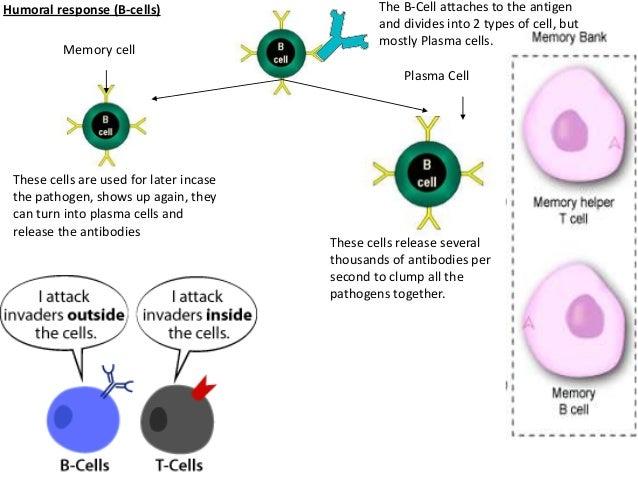 AQA Biology Unit 1 AS - Immunity