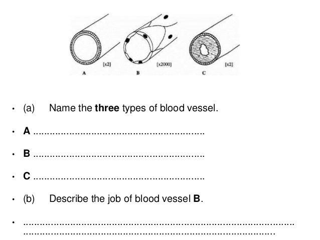 Aqa Heart Lungs Blood