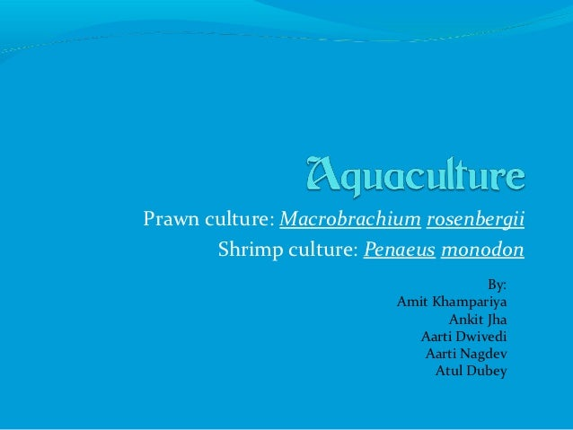 Prawn culture: Macrobrachium rosenbergii       Shrimp culture: Penaeus monodon                                       By:  ...