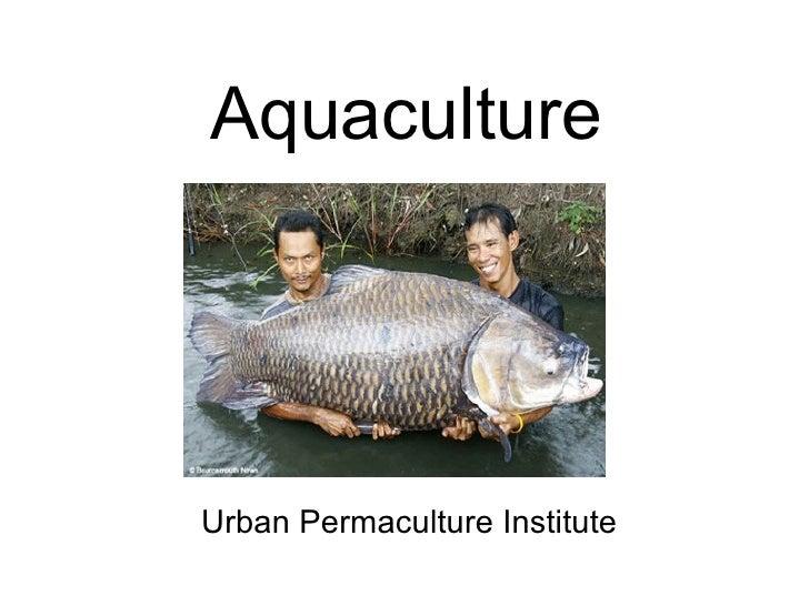 Aquaculture Urban Permaculture Institute