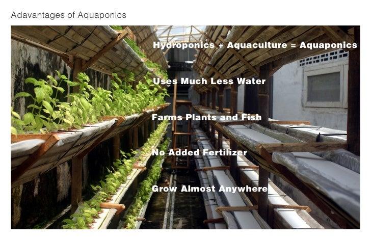 Adavantages of Aquaponics                               Hydroponics + Aquaculture = Aquaponics                            ...