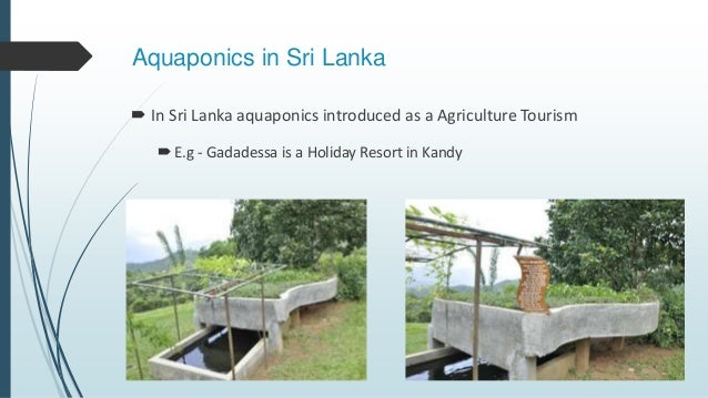 advantages disadvantages of tourism in sri lanka In my view, this encapsulates the very essence of sustainability and sri lanka tourism positioning, and should be the bedrock and foundation of all tourism development in sri lanka.