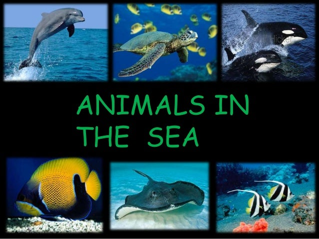ANIMALS INTHE SEA
