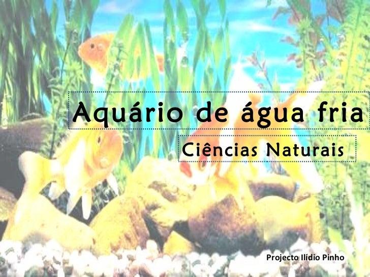 Aquário de água fria Ciências Naturais  Projecto Ilídio Pinho