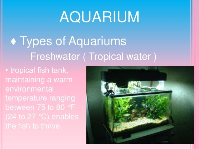 Freshwater tropical fish tank