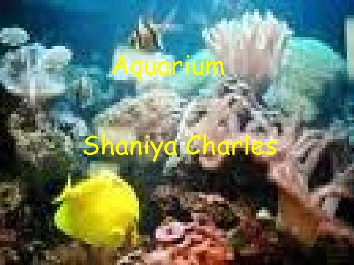 Aquarium Shaniya Charles