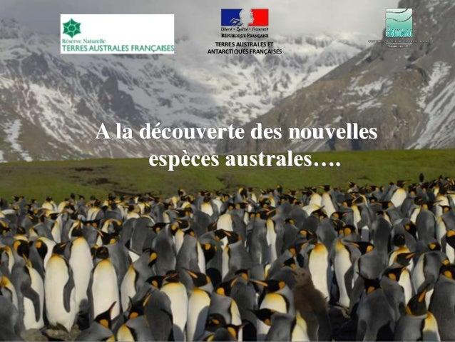 TERRES AUSTRALES ET           ANTARCTIQUES FRANÇAISESA la découverte des nouvelles      espèces australes….