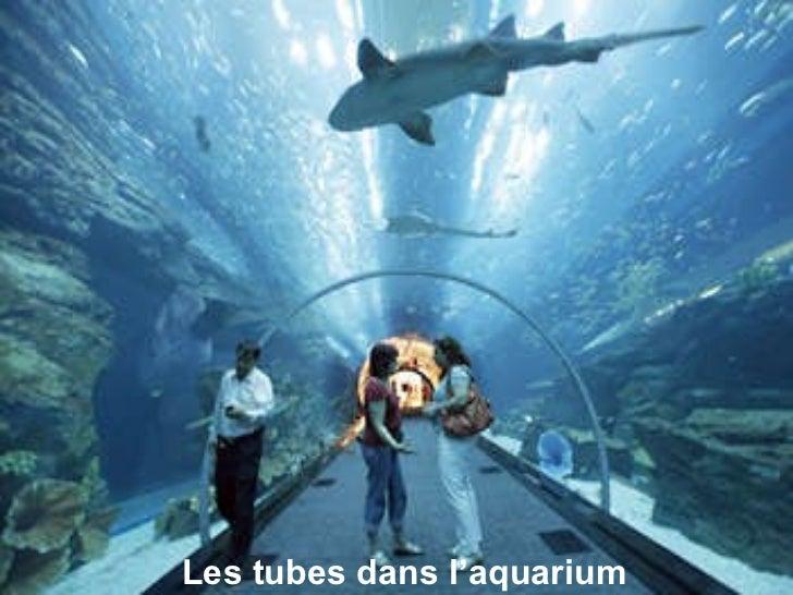 Les tubes dans l'aquarium