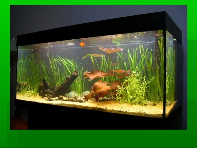Aquarium fish breeding for Fish breeding tank