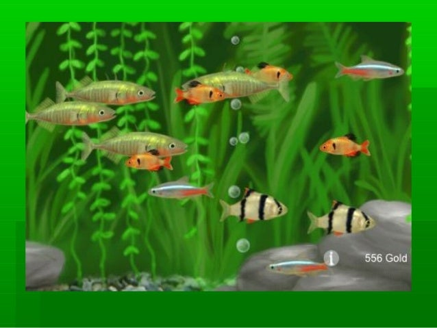 Aquarium Fish Breeding