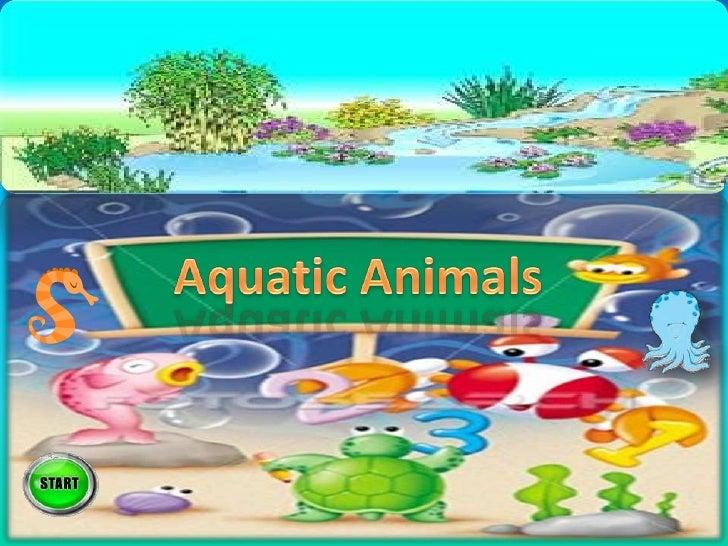 Aquatic animals  1